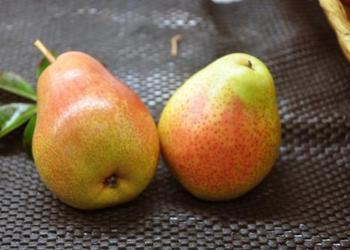 安寧紅梨種植效益高[央視視頻]