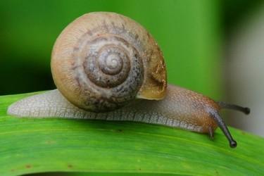 (特养创业)蜗牛饲养的市场价值