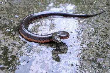 特养农技:水蛇人工饲养技术