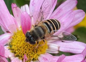 怎樣協助蜜蜂對抗天敵(養蜂知識)