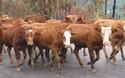 農村創業:常見的養殖創業項目有哪些?
