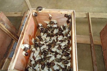 白玉蜗牛的病虫害防治措施手段