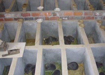 场养牛养猪养殖效益养殖池养殖基地养殖方式养殖技术养殖户养殖鸽子项目的好朋友是什么图片