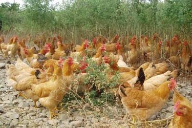 国家扶持和培育新型农业经营主体的最新政策动向