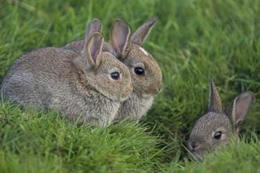 2018年養兔子前景怎樣?賺錢嗎?