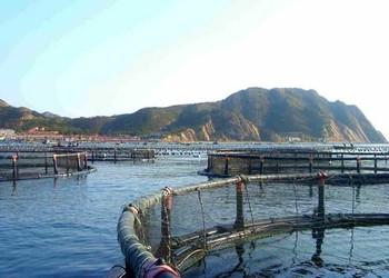 工廠化養魚的關鍵技術及投資策略