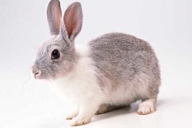 養兔創業前要做好哪些前期準備?