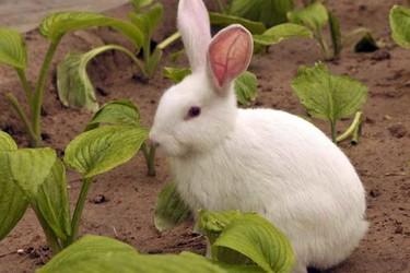 (養兔專題)新手養兔的幾個小忌諱