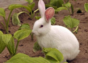 養兔有哪些禁忌?(養兔專題)