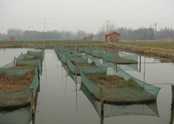 黃鱔養殖場的網箱制作及安裝方法