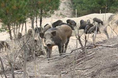 規劃建造野豬養殖場的參考方案
