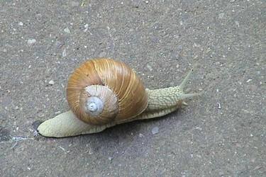 特种养殖专题:蜗牛饲养的病虫害防治