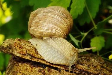 蜗牛与蚯蚓如何混养(特种养殖)