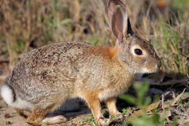 春季如何做好野兔舍内外部的保温防寒工作?