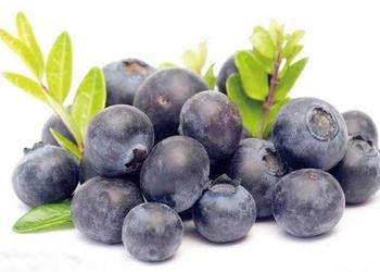 藍莓栽種方法和品種介紹[視頻]