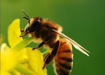 蜜蜂养殖技术要点及视频学习资料