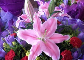 花草文化:香水百合产地与传说有哪些?