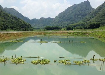 特种水产:泥鳅网箱饲养喂养技术
