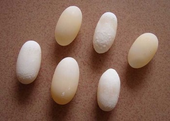 特种养殖技术:乌龟蛋怎么孵化?