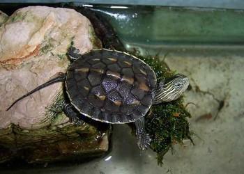 農業農村部緊急通知:龜鱉牛蛙按水生物種管理!不在禁食之列