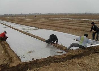 大蒜栽植种养技术(蔬菜生产)