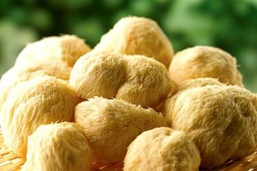 猴頭菇栽培常用的培養基配方與塑料袋栽培技術要點