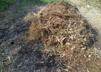 花卉技术:草木灰在花卉病虫害防治上妙用