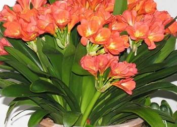(花木知識)適合室內養的植物有哪些?