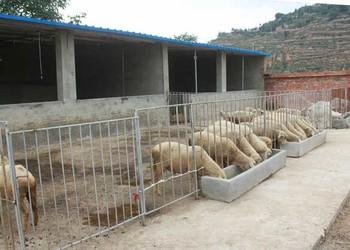 養羊技術:小尾寒羊常見病防治方法措施手段