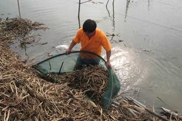 冬季誘捕黃鱔的方法(特種水產)