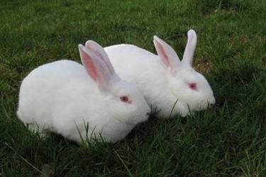兔子養殖場布局及兔舍設計圖