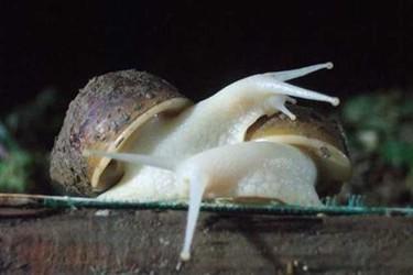 (特养创业)蜗牛饲养场土壤制备技术