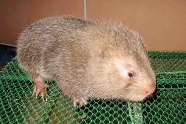 特养技术:竹鼠寄生虫防治方法