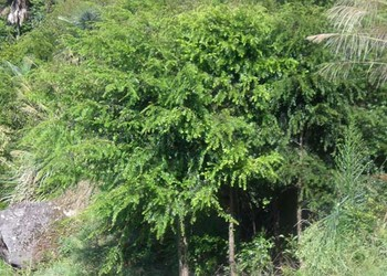 紅豆杉栽培種養技術視頻(創業資料)