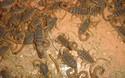 (創業項目資料)蝎子養殖技術視頻