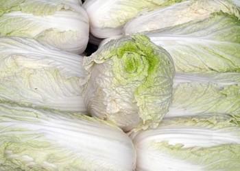 如何播種白菜種子及品種【白菜專題】