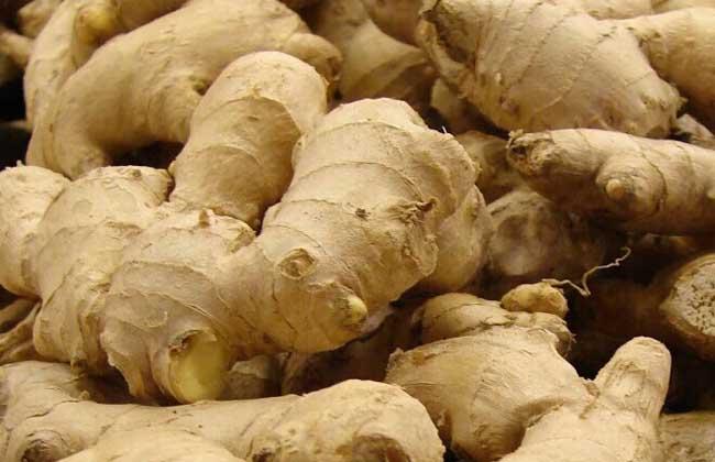 专题扇贝品种:粉丝生姜高产有哪些?蔬菜良种水开图片