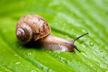 蜗牛吃什么食物?(特养专题)