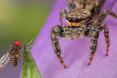蜘蛛的生活習性(生物科普知識)