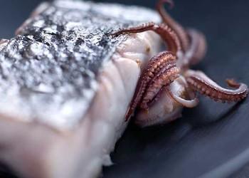 鱿鱼的产地分布(农业生物科普)