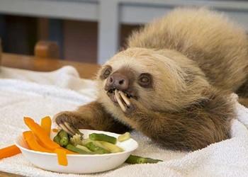 樹懶是什么動物?(生物科普知識)