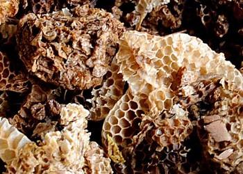 养蜂:蜜蜂螺原体病预防技术手段(特种养殖)