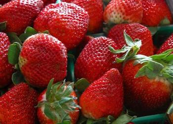 草莓是如何催熟的?草莓什么時候成熟?