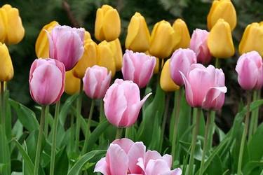圖示:春天開花的觀賞植物有哪些?