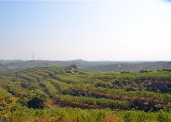 湖北農莊:綠嘉源有機生態采摘園