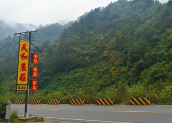 风景区项目申报项目-69农村创业网韭菜面粉面团面包零食雏鸭陕西防治