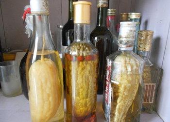 苦瓜(涼瓜或癩瓜)如何釀造保健酒?視頻