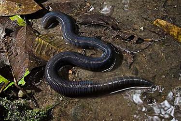 生物环保知识:蚯蚓是益虫吗?