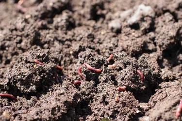 鲜活蚯蚓的长途运输方法(特种养殖)