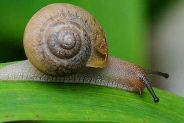 农业特养技术:蜗牛如何养才不会死?